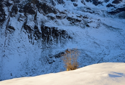 The Penultimate Larch Before Pian Del Lago, November