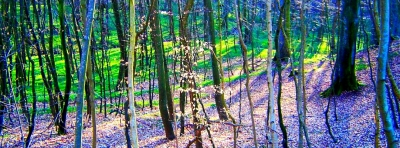 United Colors Of Forest