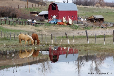 Rural Reflection
