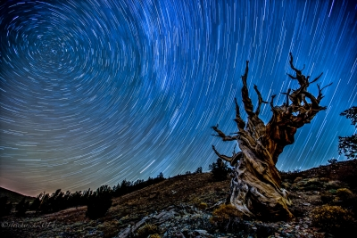 Bristlecone Pine Trails