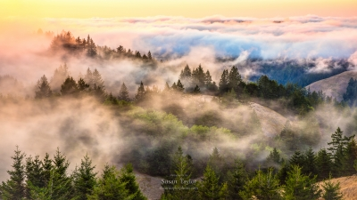 Coastal Fog Over Mount Tamalpias