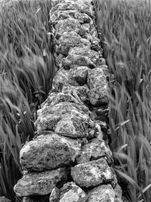 Stone Wall And Reeds