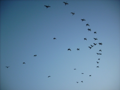 Birds Flying Over