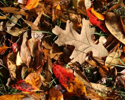 Autumn Comes … And Leaves