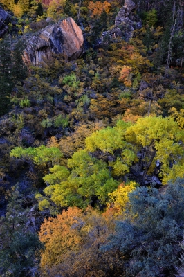 The Many Colors Of A Fall In Zion