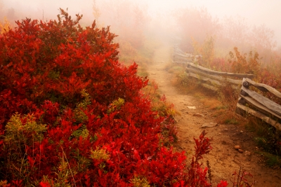 Trail In Fog