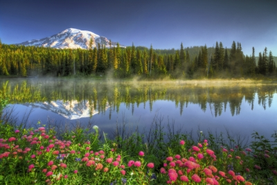 Mt. Rainier Reflection And Wild Flowers