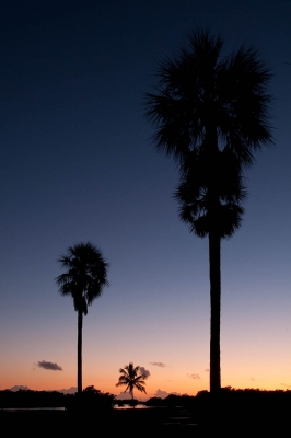 Palm Tree Monuments