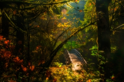An Autumn Day At Silver Falls