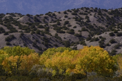 Cottonwoods And Dry Hills