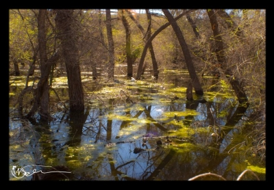Unnoticed Swamps
