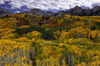 Autumn On Kebler Pass