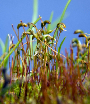 Sprouting Moss