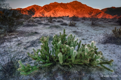 Early Morning Cactus