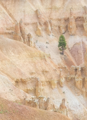 Lonesome In Bryce