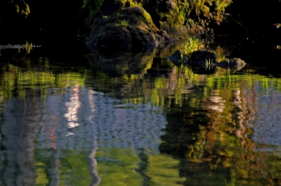 Pond Reflections At Dawn