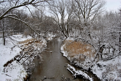 Snowy River Banks