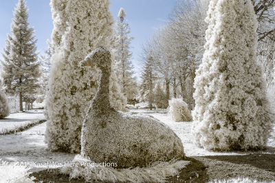 Botanical Garden In Infrared