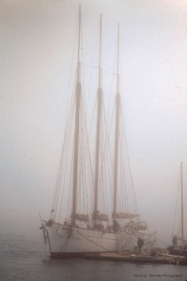Masts And Mist