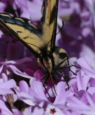 My, What Good Phlox You Have!