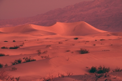 Mesquite Flat Dunes At Dawn