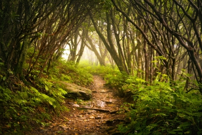 The Unknown – Appalachian Hiking Trail In Fog