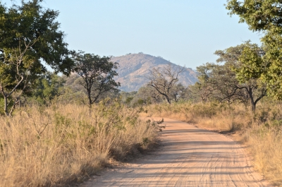 Typical Winter Landscape In Kruger National Park