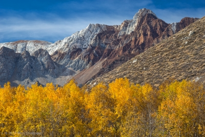 Autumn Leaves And Sierra Range