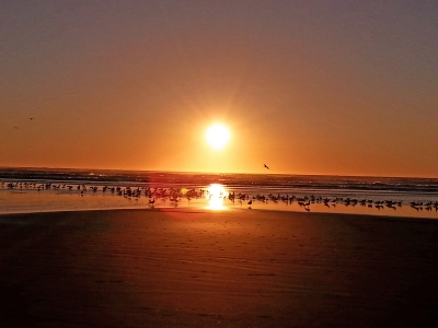 Birds In Oregon Coast Sunset