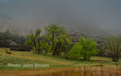 Ute Valley Fog