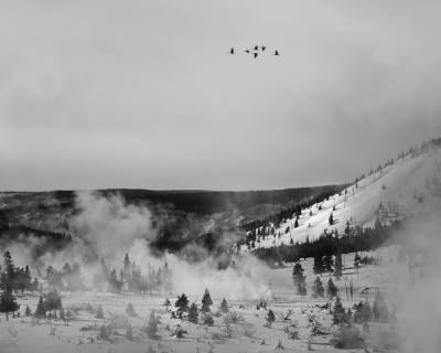 Swans Over Yellowstone