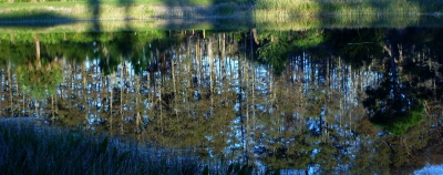 Lake Reflecting Trees10