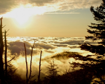 Clingmans Dome, Tn