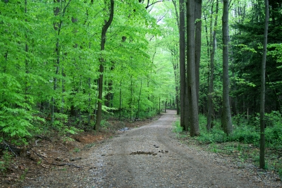 Old Horse Trail Through The Woods