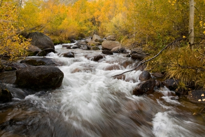 Fall Colors, Bishop Creek Canyon