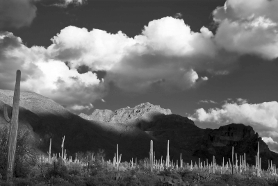 Saguars And Clouds