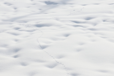 Tracks Of A Snow Diver