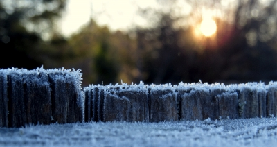 Frozen Morning