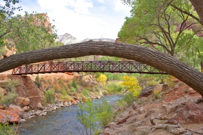 The Grotto – Zion National Park