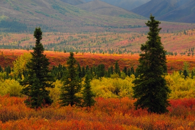 Autumn At Denali