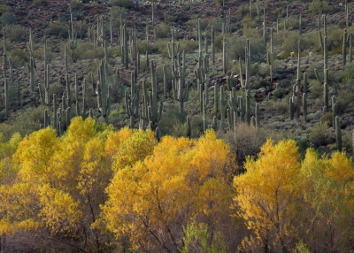 Sonoran Desert Fall.