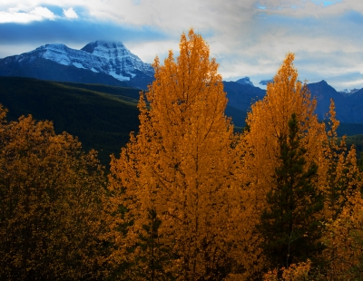 The Golden Larches.