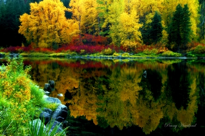 Autumn Colors In Tumwater