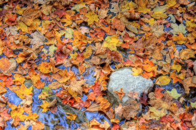 Fall Collection Of Color