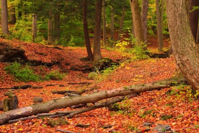 The Autumn Woods Of Emery Park