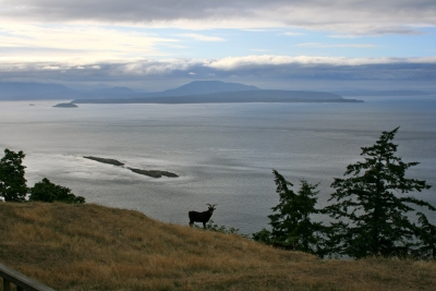 Goat On A Bluff