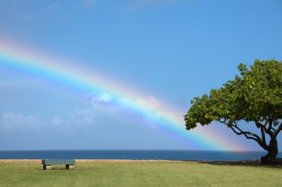 Tree At The End Of The Rainbow