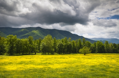 Cades Cove Great Smoky Mountains National Park Tn – Fields Of Gold