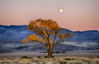 Harvest Moon In The Eastern Sierra
