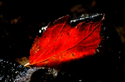 Leaf & Light